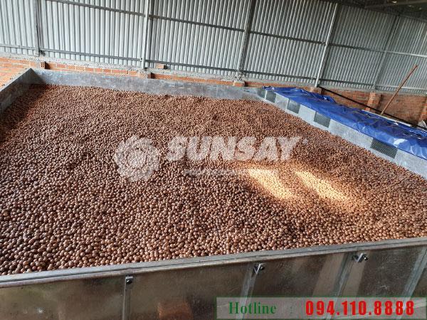 Máy sấy hạt mắc ca công nghiệp