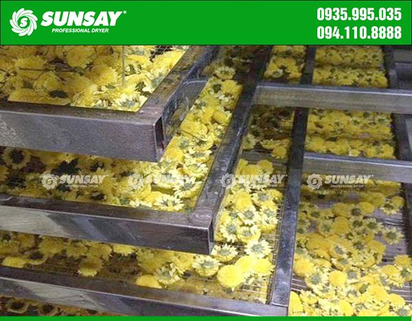 Hoa cúc được xếp đều vào khay sấy SUNSAY